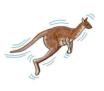 kangarooLEAP